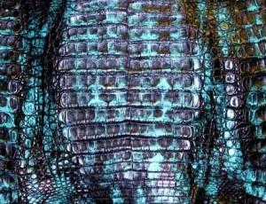Black-Turquoise Caiman