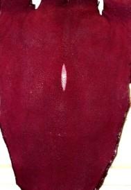 Burgundy Stingray