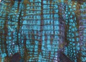 Chocolate Turquoise Caiman