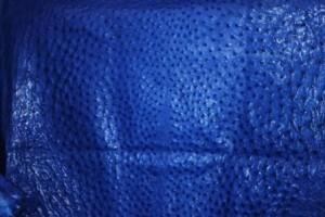Mod Blue Ostrich