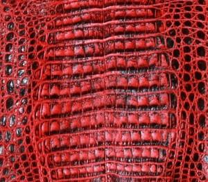 Vintage Red Caiman
